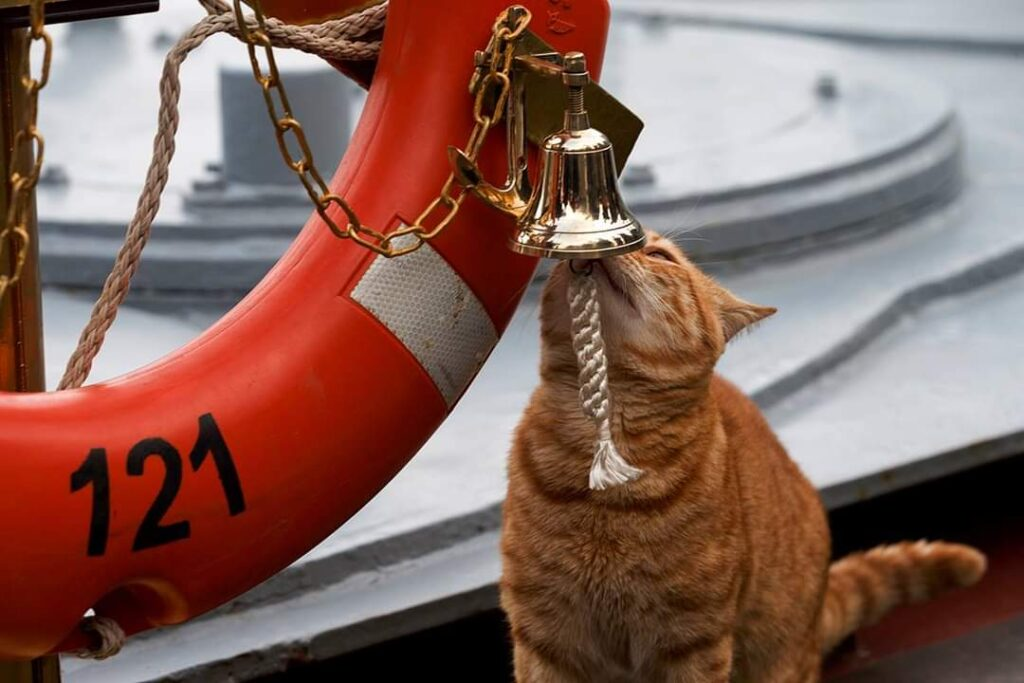 russian navy cat - naval post- naval news and information
